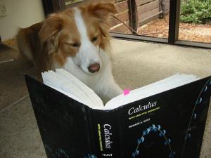 CalculusDog